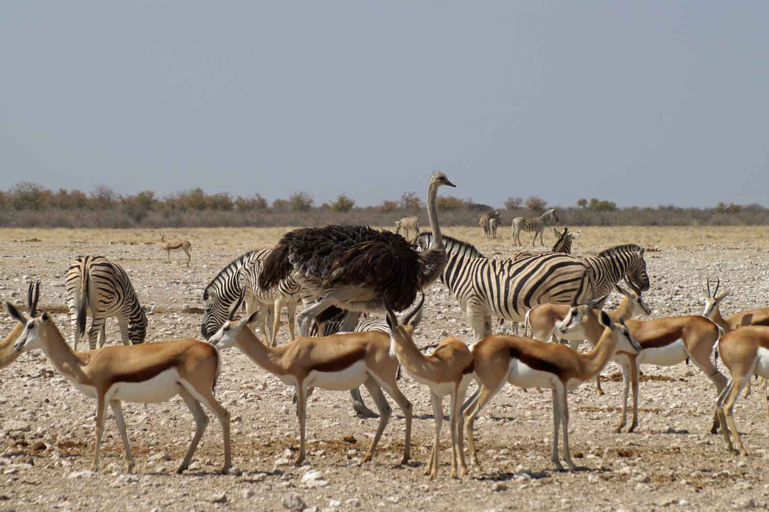 Safari im Etosha Nationalpark