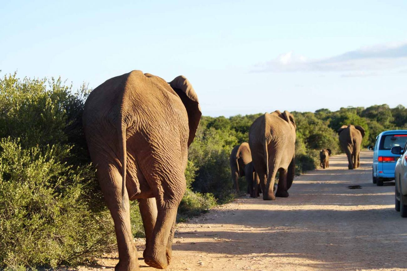 Elefanten - Safari mit Kind im Addo Nationalpark