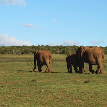 Safari im Addo Elephant National Park