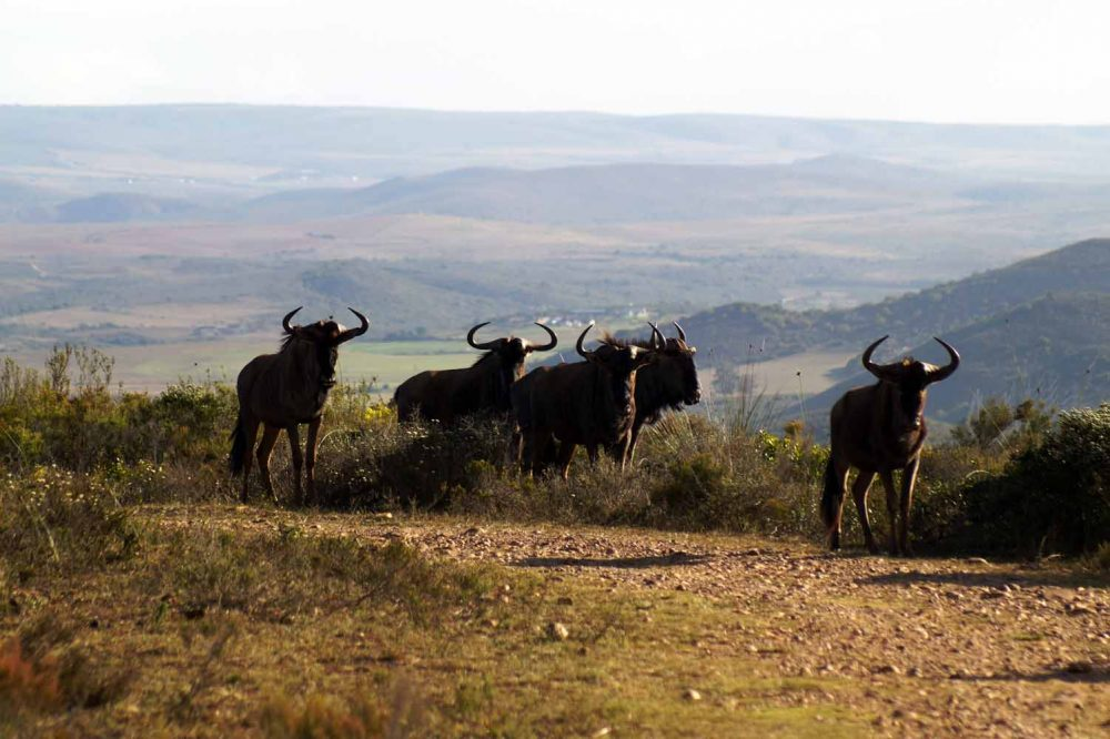 Privates Game Reserve in Wilderness