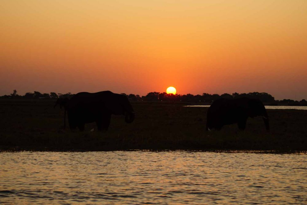 Sundowner Cruise Chobe River