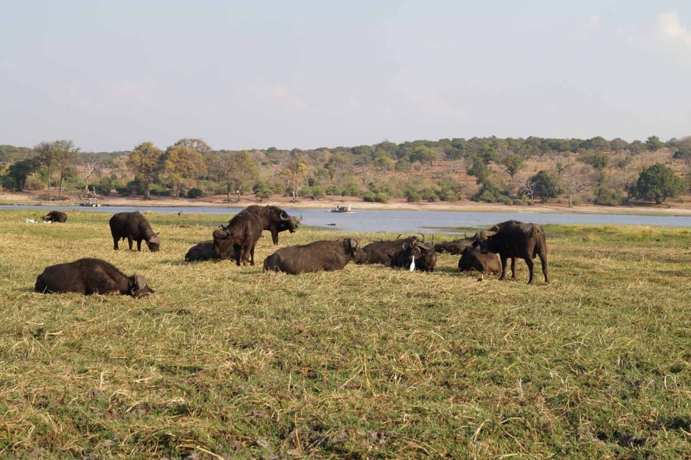 River Cruise im Chobe Nationalpark