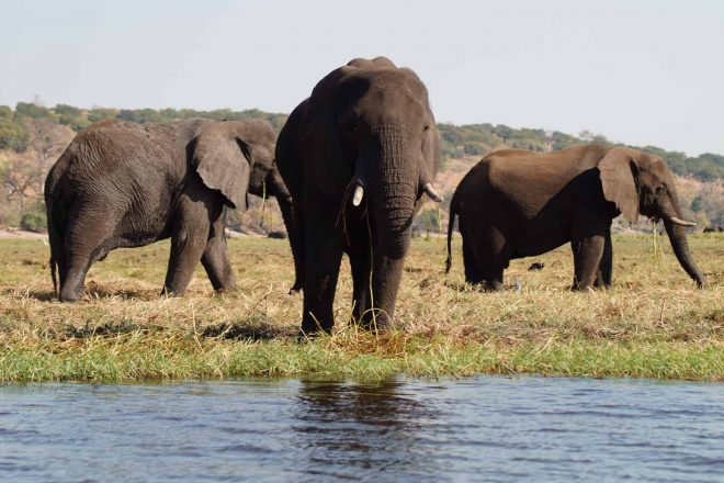 Chobe Nationalpark Safari