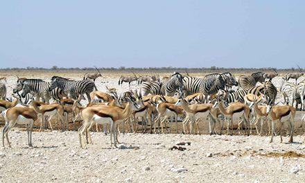 Etosha Nationalpark in Namibia – Highlight für Tierliebhaber