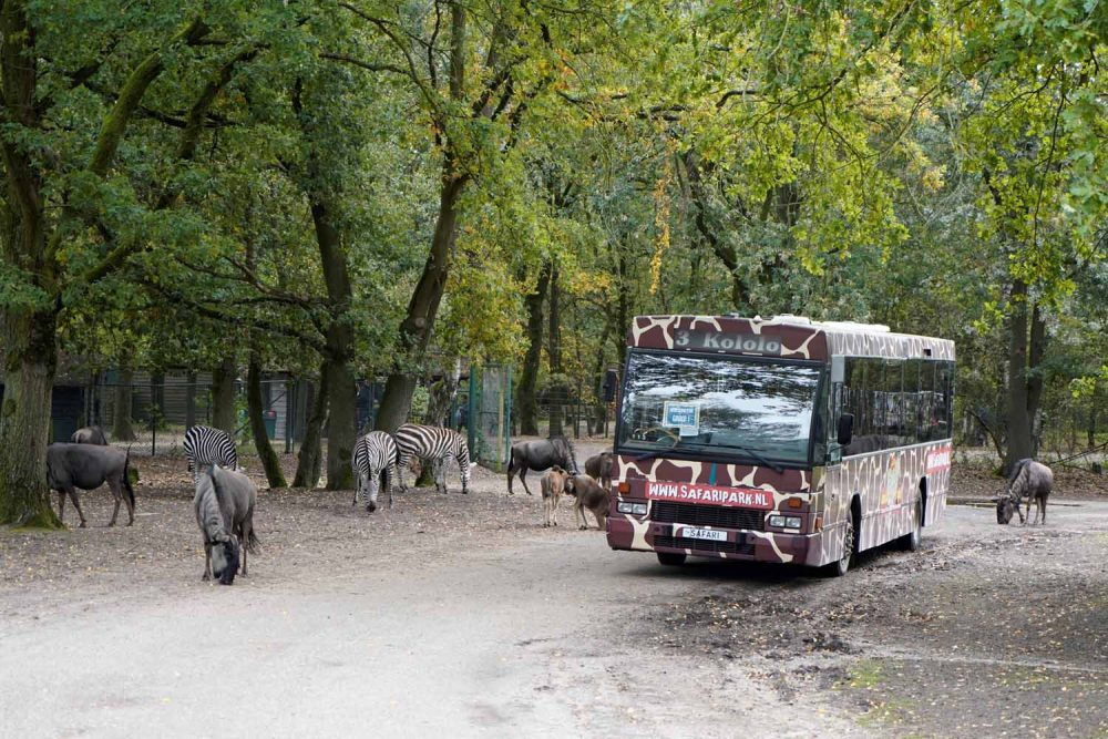 Bus Safari in Beekse Bergen