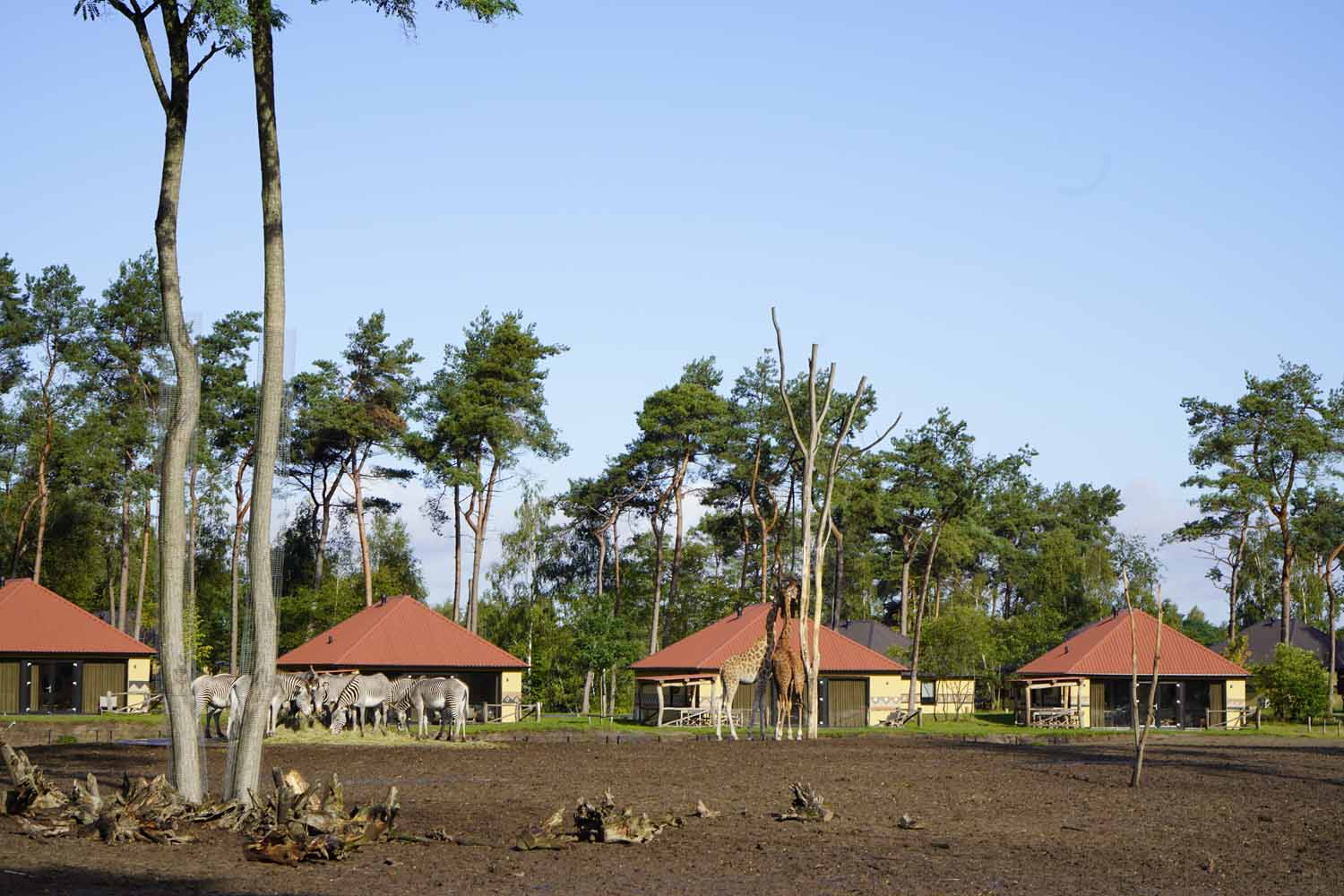Beekse Bergen Safari Resort – Afrika-Feeling in den Niederlanden