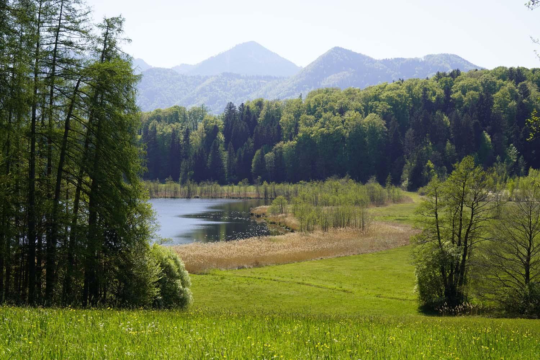 Abwechsungsreiche Moorwanderung rund um den Bärnsee im Chiemgau